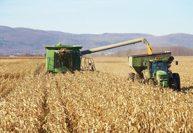 Grâce à la demande domestique forte, les bases locales dans le maïs se maintiennent malgré la récolte abondante aux États-Unis. Crédit photo : Archives/TCN