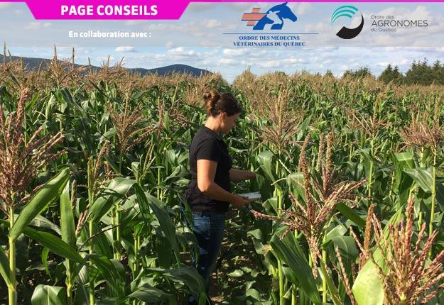 L'emploi d'un pesticide approprié à la situation et appliqué au moment opportun est possible grâce au dépistage des ravageurs. Crédit photo : Ordre des agronomes du Québec