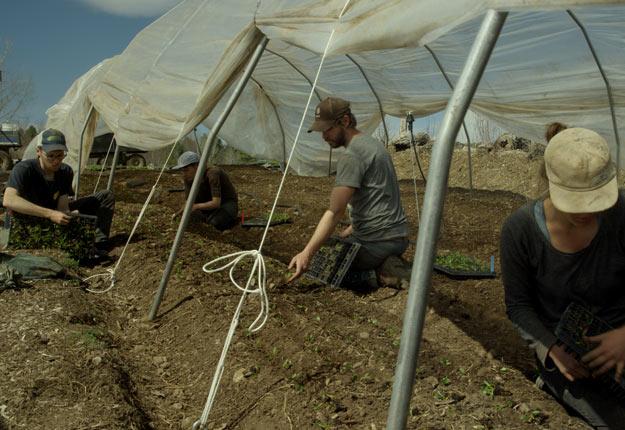 Marcel Groleau a été « impressionné » par les fermes maraîchères intensives montrées dans le film, comme la Ferme des Quatre-Temps. Crédit photo : Atelier Brooklyn