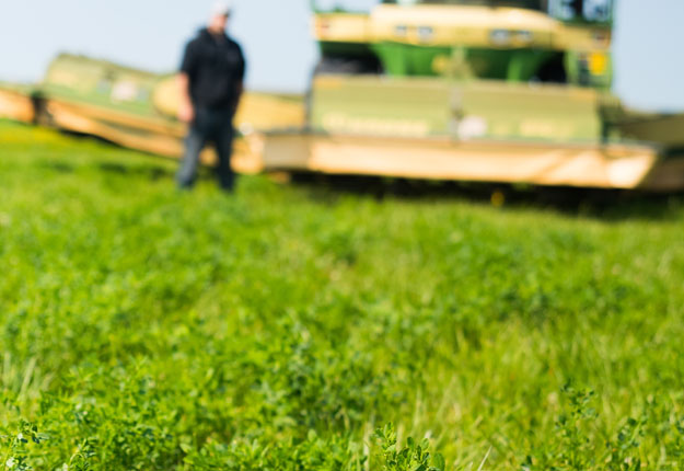 Près de 2 000 acres de luzerne GM ont été semés en 2017, d'après le promoteur Forage Genetics International. Crédit photo : Martin Ménard/Archives TCN
