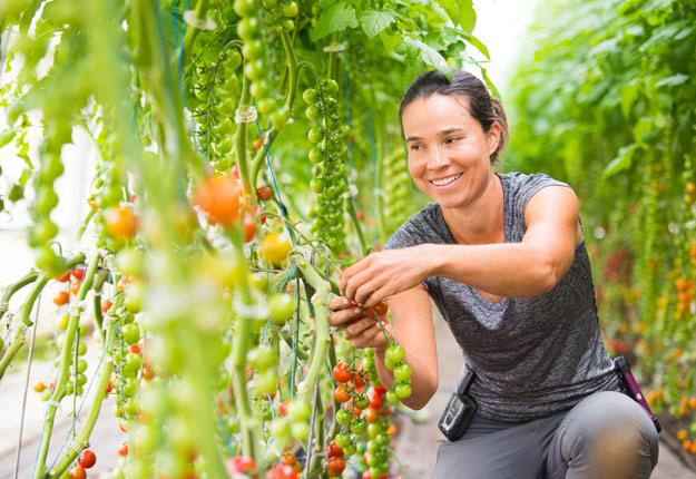 """« Les clients appellent mes tomates cerises """"les petits bonbons"""". En champ, je ne penserais même pas en produire; elles seraient craquées et plus petites. En serre, la qualité et les rendements sont excellents », témoigne Valérie Campeau. Crédit photo : Martin Ménard/TCN"""