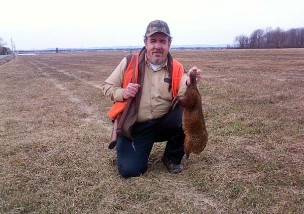 Paul Bilodeau, qui chasse depuis 51 ans, avait récolté 2 439 marmottes au début d'août. Celle-ci est sa 2 000e, un total que peu de chasseurs peuvent revendiquer. Crédit photo : Gracieuseté Paul Bilodeau