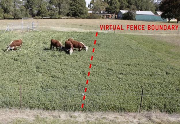 Contrôlé via une application mobile sur un téléphone intelligent, le collier permet de déplacer, rassembler ou tout simplement surveiller les vaches dans la zone de pâturage que l'éleveur a déterminé.