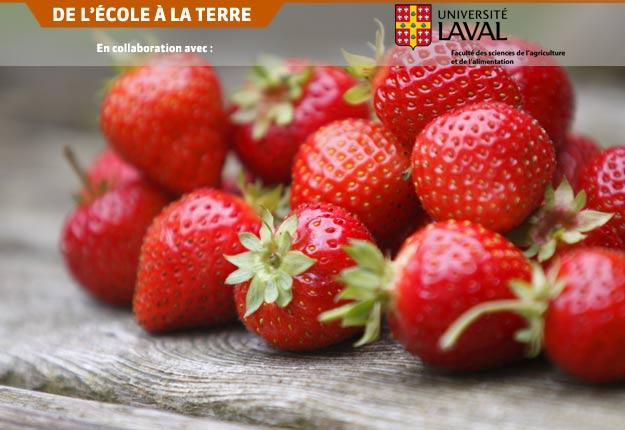 L'équipe de chercheurs de l'INAF, dont fait partie le professeur Yves Desjardins, peut démontrer que les polyphénols des fraises et des canneberges améliorent la sensibilité à l'insuline chez des individus à risque de développer le diabète de type 2.