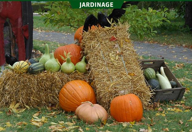 En plus de servir à décorer, la citrouille peut être cultivée pour ses feuilles, ses graines, ses fleurs et sa chair. Crédit photo : Rock Giguère