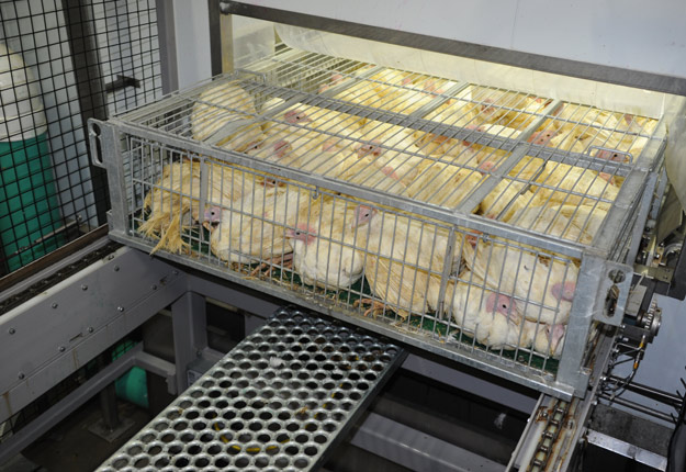 Le système d'anesthésie d'oiseaux au CO2 est déjà en place à l'abattoir Unidindon de Saint-Jean-Baptiste-de-Rouville. Crédit photo : Archives/TCN