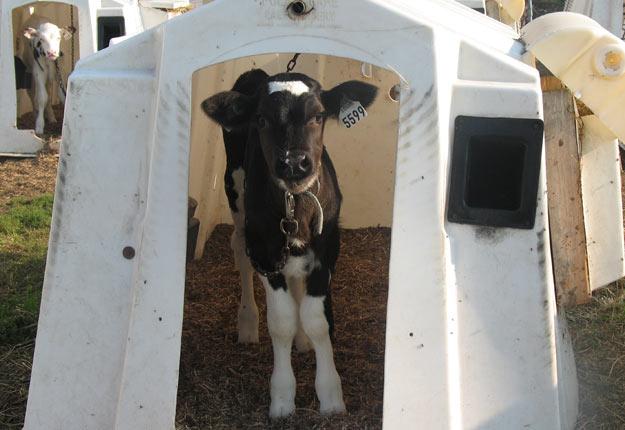 Crédit photo: Producteurs de bovins du Québec