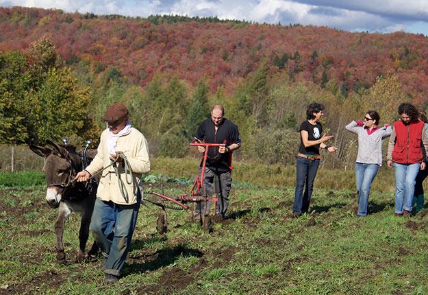 Les cinq participants se sont exercés à effectuer les travaux à l'aide des ânes. Crédit photo: Frédéric Marcoux