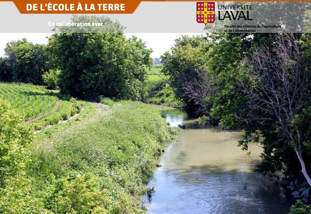 La rivière agit comme un véritable catalyseur permettant le retour de la diversité végétale en sous-étage dans les plantations en milieu riverain. Crédit photo : Archives/TCN