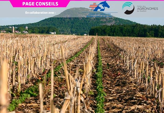Le semis direct fait partie des pratiques qui relèvent de l'agriculture régénératrice. Crédit photo : Archives/TCN