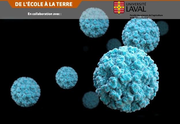 Afin d'inactiver les virus avant qu'ils puissent infecter le consommateur, plusieurs stratégies et traitements sont actuellement étudiés par le Laboratoire de virologie alimentaire de l'Université Laval. Crédit photo : CDC