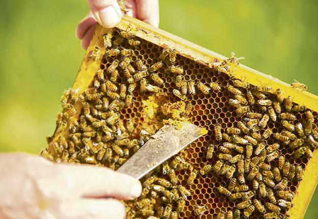 Quatre échantillons de miel achetés au Québec dans le cadre d'une étude internationale contenaient des néonicotinoïdes. Crédit photo: Martin Ménard / Archives TCN