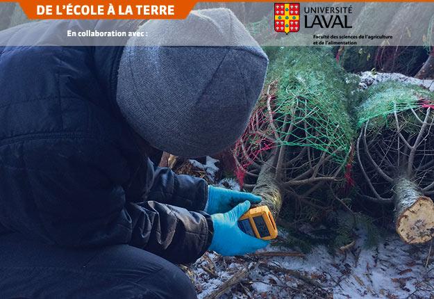 Des outils guideront les producteurs dans l'application des bonnes pratiques de conservation des arbres pour maximiser la rétention des aiguilles. Crédit photo : Dominique Choquette