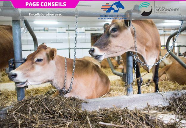 Le programme proAction permet de s'assurer que les besoins de base et les conditions de logement des vaches laitières seront évalués par une tierce partie. Crédit photo : Archives/TCN