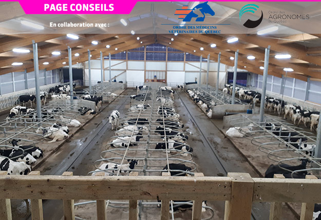 En traite robotisée, les animaux décident librement de leur horaire de traite, de repas et de repos. Cette nouvelle étable robotisée sur sable est dotée de quatre robots de traite. Crédit photo: OAQ