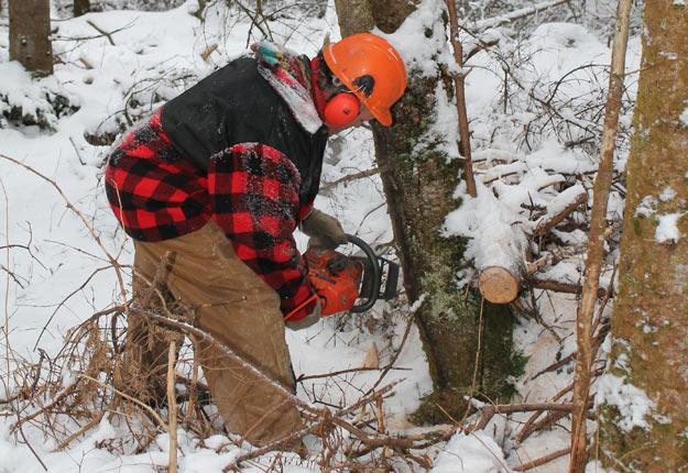 La demande en bois rond a été forte en 2017 au Québec, mais le prix n'augmente pas avec la même ampleur que celui du bois d'œuvre. Crédit photo : Archives TCN