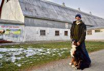 René Matter perd environ trois veaux par année à cause des coyotes et des corneilles. Crédit photo: Johanne Fournier