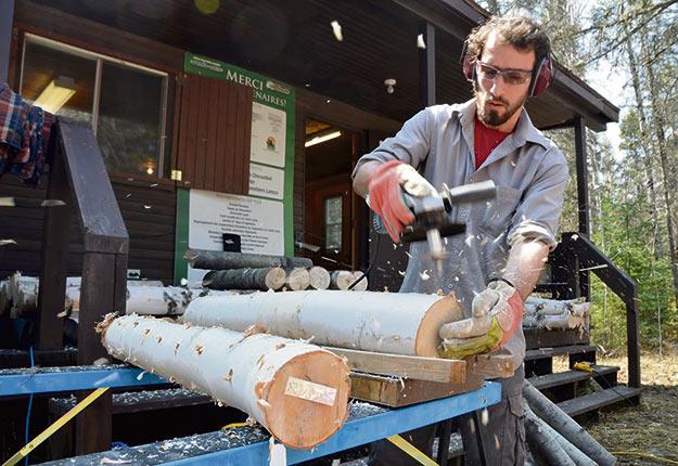 Seulement 7% des billes de bois inoculées avec des champignons ont produit des pleurotes, mais la culture sur paille s'est avérée beaucoup plus intéressante. Crédit photo : Guillaume Roy