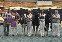 Les frères Dominic et Maxime Petitclerc (à gauche), lors de la World Dairy Expo, à Madison, en octobre dernier. Crédit photo : Gracieuseté de Holstein Québec