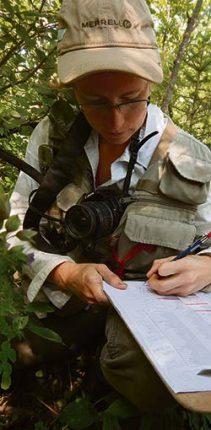 Audrey Lachance, coordonnatrice de l'étude sur la faune dans les cannebergières, en plein travail. Crédit photo : Andréanne Blais
