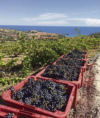 Lisette Lapointe possède un petit vignoble en France. Gracieuseté de Lisette Lapointe