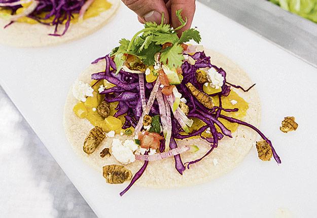 Tacos de chrysalides de vers à soie. Crédit photo: Gracieuseté d'Espace pour la vie