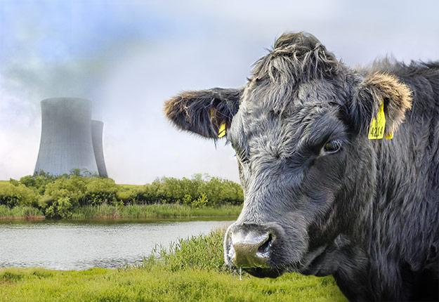 L'expansion des troupeaux deviendrait démesurément coûteuse s'ils devaient être soumis aux mêmes règles environnementales que les déchets nucléaires... Photomontage: Judith Boivin-Robert/TCN