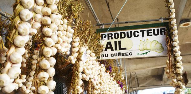 Quatre-vingts pour cent de l'ail consommé au Québec vient de l'extérieur de la Belle Province. Crédit photo : Archives/TCN