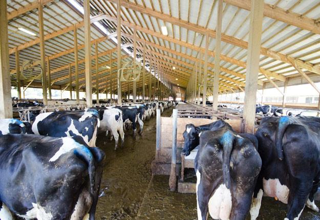 La nouvelle étude montre que les producteurs de lait américains ne couvrent pas leurs coûts de production depuis plus d'une décennie. Crédit photo: Martin Ménard / TCN
