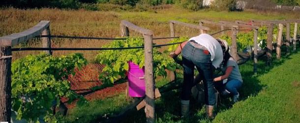 Jean-Christophe était bien heureux de montrer à Frédérique son « invention » pour ramasser les cerises de terre. Crédit photo : Gracieuseté de V