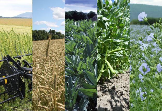 Les cinq cultures émergentes maintenant couvertes par l'assurance récolte. Photos : Archives/TCN et Institut national de la recherche agronomique