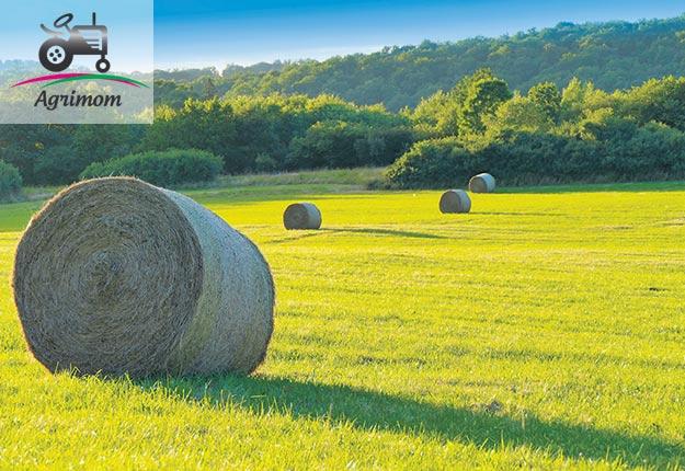 Il me semble que la vie de famille est tellement plus facile sur une ferme.