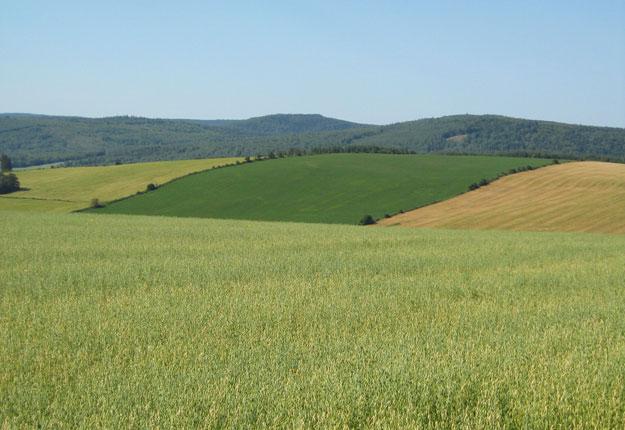 Le Comité a fait des recommandations, notamment pour renforcer la capacité financière des producteurs et de la relève agricole. Crédit photo: Archives/TCN
