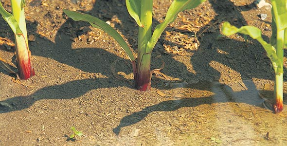 L'étude de l'IRDA permettra d'évaluer la santé des sols, notamment leur compaction ou leur érosion. Archives/TCN