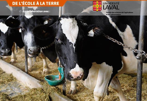 Une étude suggère que les producteurs laitiers atteignant le seuil d'excellence du programme proActionMD pour le bien-être des animaux ont une productivité et une rentabilité accrues. Crédit photo : Archives TCN