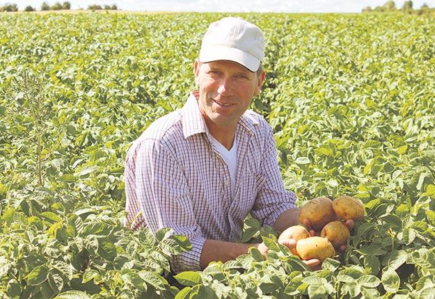 Martin Goyet et son équipe sont spécialisés dans la production de pommes de terre. Ils ont tenté l'expérience du bio en 2016. Si les rendements ont été acceptables, la mise en marché s'est avérée plus difficile. Crédit photo: Gracieuseté de Martin Goyet