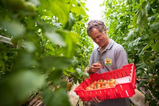 L'Américain David Chapman veut contrer les faiblesses de la norme biologique américaine en réclamant des conditions plus sévères à respecter pour obtenir la certification d'aliments considérés comme « vraiment biologiques ». Photo : Gracieuseté de David Chapman