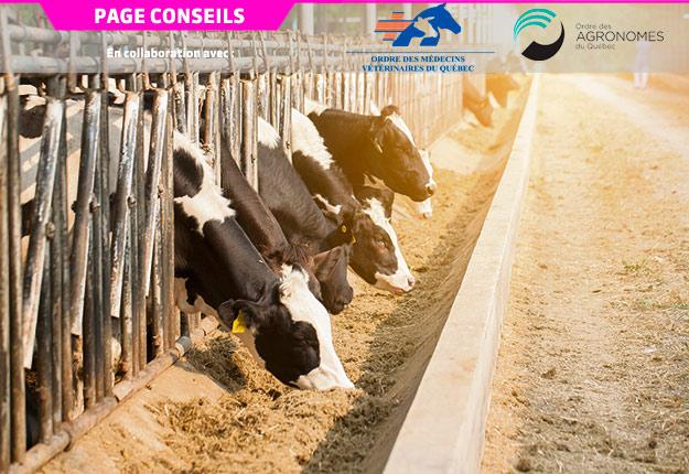 Par temps chaud, les animaux ont tendance à diminuer leur consommation volontaire de matière sèche.