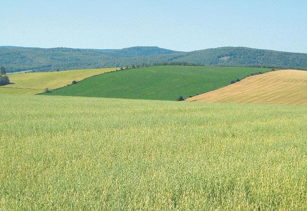 Selon le rapport du Sénat, c'est en Alberta, au Manitoba et au Québec que l'augmentation de la valeur des terres agricoles du Canada a été la plus marquée. Crédit photo: Archives/TCN