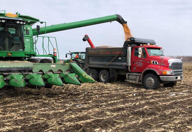 En Estrie, la Ferme l'Espoir vient de terminer la récolte de maïs. Seulement trois rangées n'ont pu être récoltées en raison de la neige par endroits. Crédit photo : Éric Nault