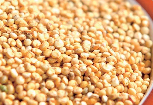 Le quinoa ne peut pas être cultivé n'importe où, ne serait-ce que parce qu'il s'agit d'une plante qui se développe en climat frais.