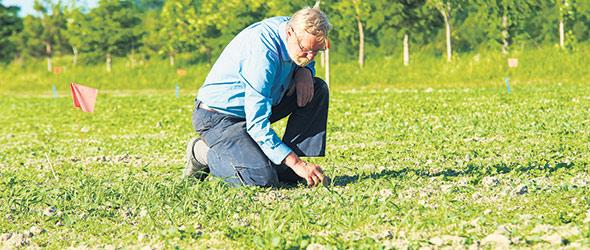 Plusieurs producteurs comme Jacques Dallaire réalisent des parcelles d'essai dans leur propre ferme afin d'améliorer leur choix de variétés et leurs pratiques culturales. Crédit photo : Martin Ménard / TCN