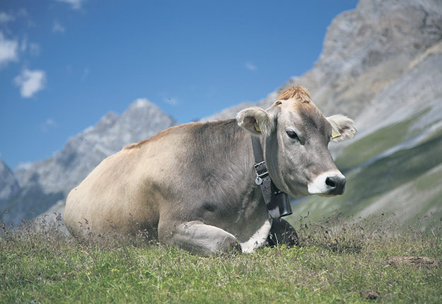 En Suisse, des règles strictes encadrent les indications de provenance, comme celle du fromage, qui doit contenir du lait frais suisse. Crédit photo : Daniel Schwen