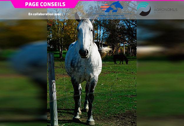 L'affection la plus redoutée par les propriétaires de chevaux est sans doute la fourbure, une inflammation du tissu podophylleux (lamelles du pied). Crédit photo : Archives TCN