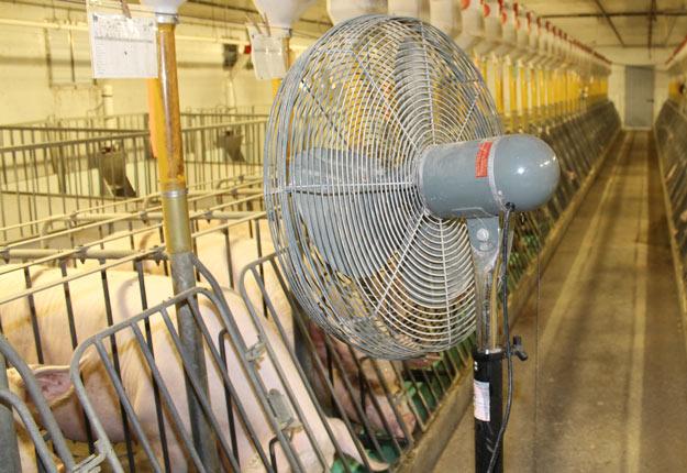 Une ventilation adéquate est névralgique en période de chaleur, tant à la ferme que dans les camions de transport. Crédit photo: Archives TCN