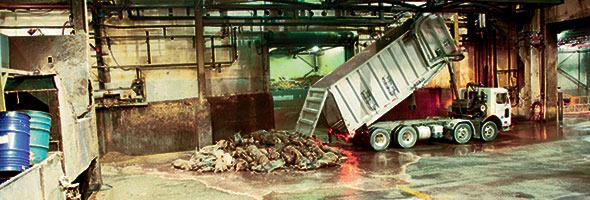 Pour gérer l'important arrivage, l'usine de Québec a dû maintenir ses activités pendant 13journées consécutives. Crédit photo : Archives TCN