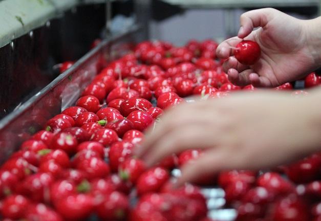 Comme la disponibilité varie selon les saisons et les récoltes, les producteurs ne peuvent garantir un volume d'approvisionnement aux chaînes d'alimentation. Crédit photo : Myriam Laplante El Haïli/TCN