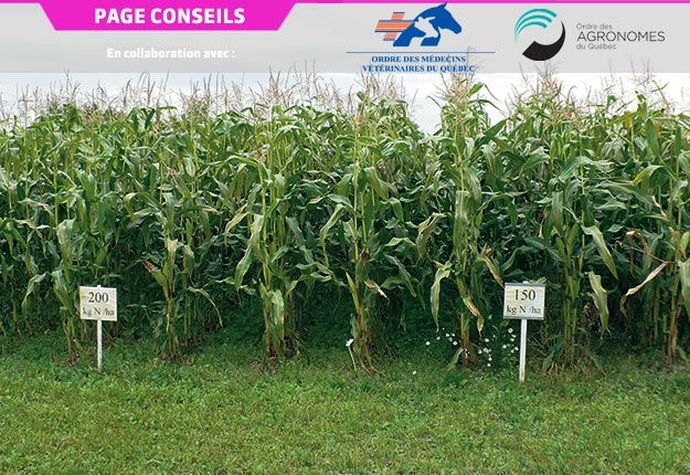L'objectif ultime de la recommandation: estimer correctement l'écart entre l'azote fourni par le sol et celui requis par la culture. Crédit photo: MAPAQ