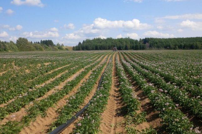 « Habituellement, on ne voit plus de terre de chaque côté des rangs. Mais cette année, on en voit beaucoup. » – Yvon Cardinal, producteur du Centre-du-Québec Photo : Archives/TCN