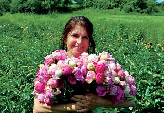 Pour en faciliter le transport et la conservation, Mano Capano vend ses pivoines en boutons aux fleuristes. Crédit photos : Johanne Martin